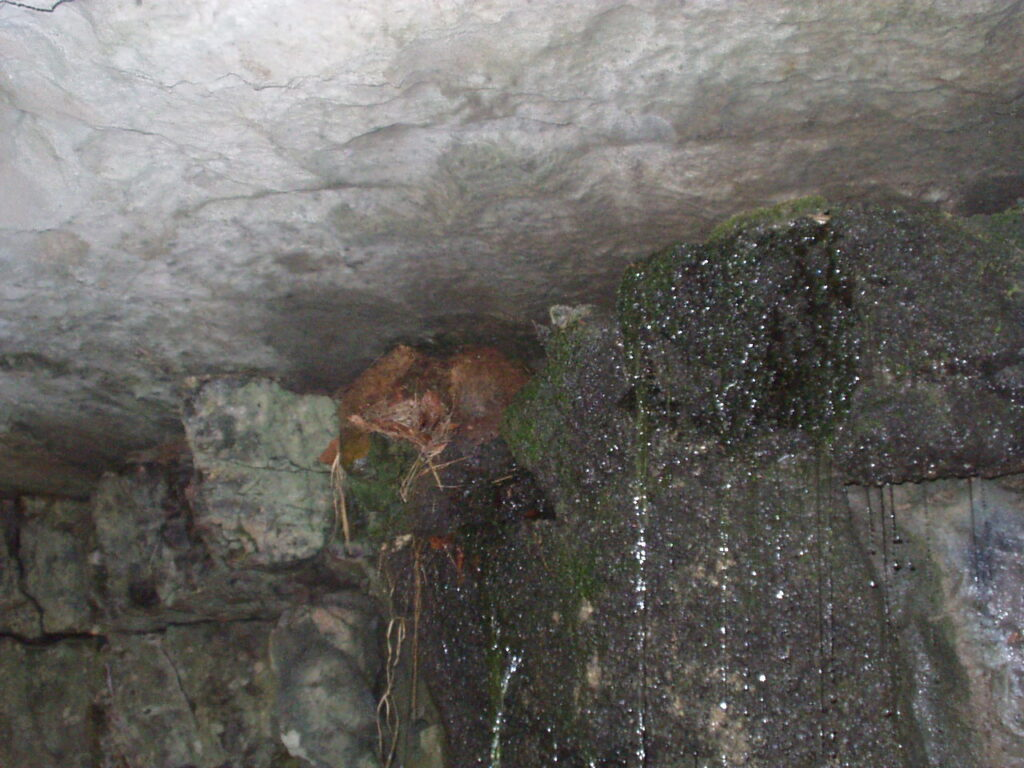 nido di merlo